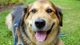 Según una investigación científica, los humanos y los perros comparten genes