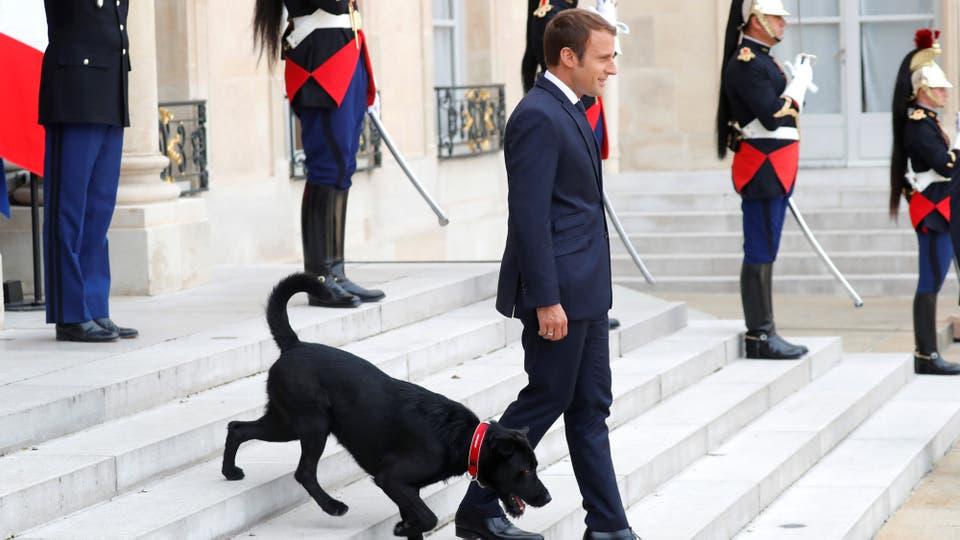 """Nemo fue adoptado en un refugio por el presidente francés, Emannuel Macron y lo nombró así en referencia al célebre capitán de la novela de Julio Verne """"Veinte mil leguas de viaje submarino"""". Foto: Reuters"""