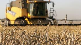 """Se """"normalizan"""" los precios del trigo"""