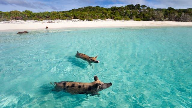 Playas de Nassau en Las Bahamas - playascalascom