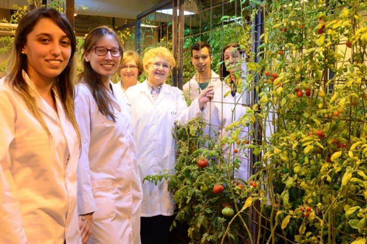 El equipo liderado por Valle junto a algunos de los tomates testeados