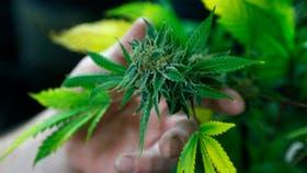 En Chubut, por ley, se suma el aceite de cannabis al vademécum de la obra social provincial, Seros, para el tratamiento de personas con epilepsia