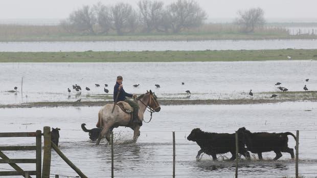 En Bolívar, según los productores, la inundación cubre la mayor parte de los campos