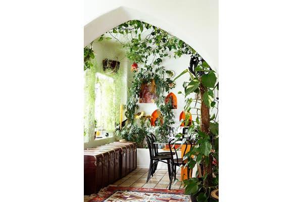 Las plantas colgantes también sirven para interiores. Foto: Gentileza Pinterest Welcome to the Jungalow