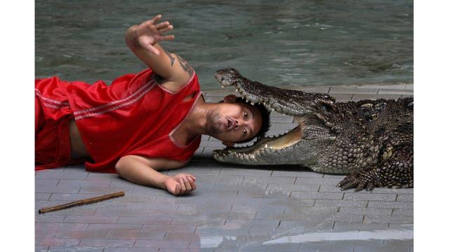 Un artista pone su cabeza entre las mandíbulas de un cocodrilo durante una actuación para los turistas en el zoo del tigre de Sriracha, en la provincia de Chonburi,