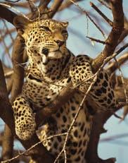 Tanzania: paraíso salvaje