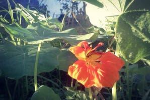 Cinco lugares para comprar orgánico y agroecológico