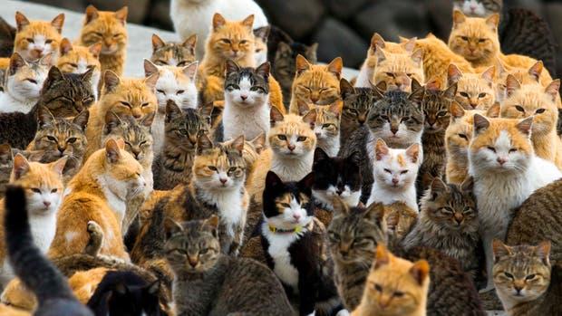 China: la policía evitó que 500 gatos fueran convertidos en comida
