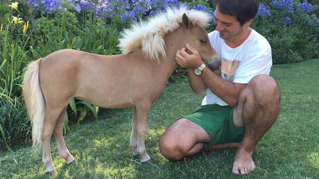 Una mueblería fue denunciada por exhibir un pony en su vidriera