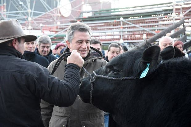 """Etchevehere recibió ayer a """"Don Pablo"""", el primer toro que entró en la Rural"""