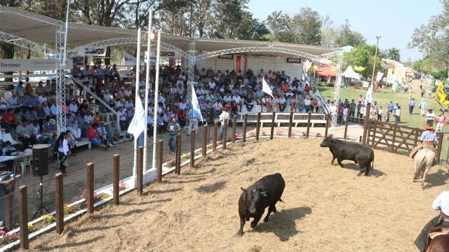 Desfile de campeones en la Sociedad Rural de Formosa por la Expo 2017