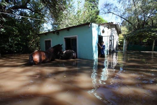 Cientos de animales han quedado atrapados por el agua en toda la zona de la inundación. Foto: LA NACION / Ricardo Pristupluk