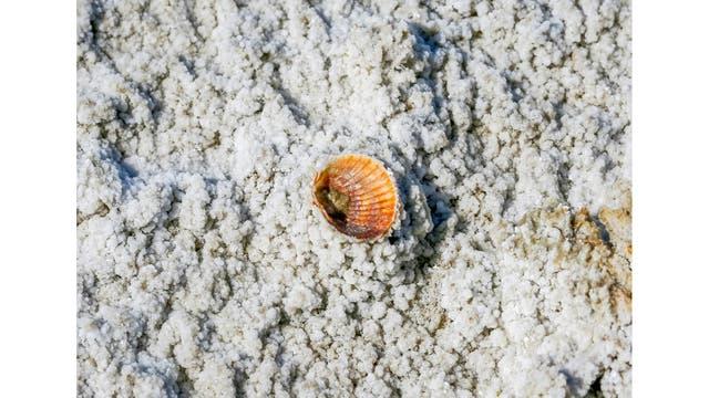 Una concha de mar en un suelo salino