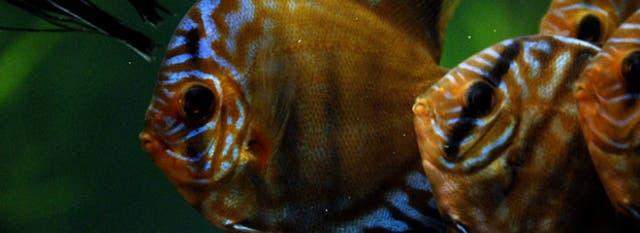 El acuario es una de las grandes novedades este año con más de 50 especies