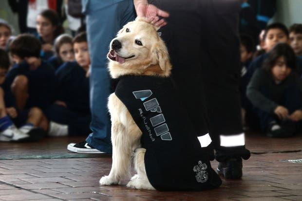 La Afip hizo demostraciones con sus perros en escuelas primarias