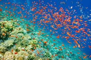 Océanos: salvemos la vida acuática