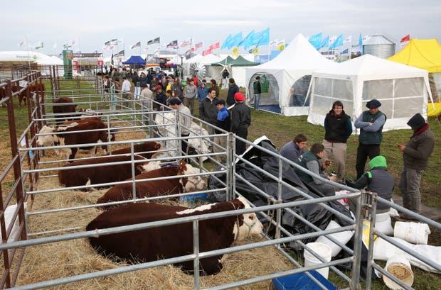 La muestra, centro de atención para la ganadería