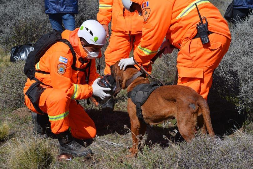 Con perros capacitados para la búsqueda se buscaron rastros en una extensa área.