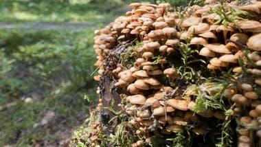 Muy pronto los hongos podrían ser usados como sustitutos en la fabricación de una serie de materiales y productos