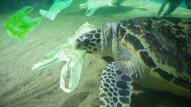 Para los animales, la ingesta de plástico puede ser mortal