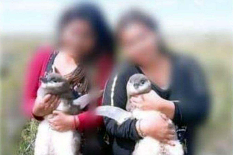 Indignación por una foto de turistas agarrando pingüinos por el cuello