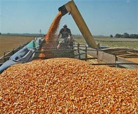 El poder de compra para la exportación en maíz es un 40% más alto por la quita de las retenciones