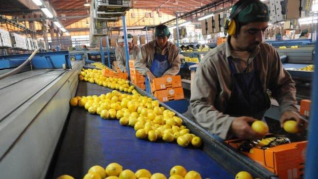 Estados Unidos postergó el ingreso de limones argentinos por otros 30 días