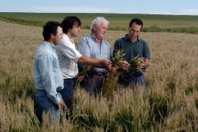 Los Zubiri: Javier, Francisco, Pedro y Miguel, sobre un lote de cebada con daños superiores al 50 por ciento