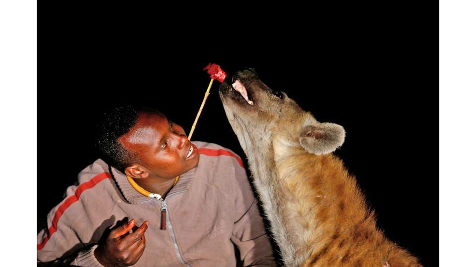 Abbas Yusuf, de 23 años, conocido como Hyena Man, alimenta una hiena en las afueras de la ciudad amurallada de Harar