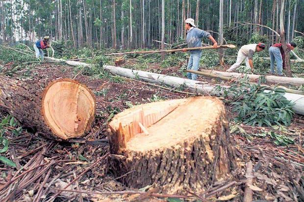 Cambio climático: advierten que debe haber deforestación cero en cuatro años