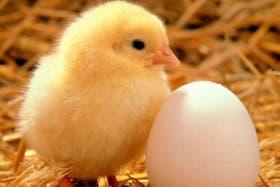 La cáscara del huevo no es completamente hermética