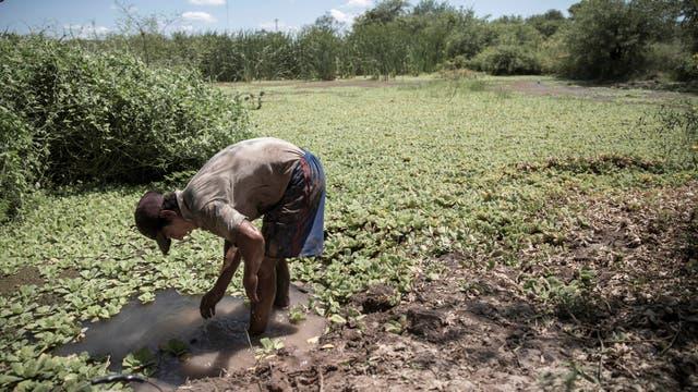 En su momento de descanso, Caceres se refresca en el lago de donde retira el barro que usa para los ladrillos. Foto: LA NACION / Santiago Filipuzzi
