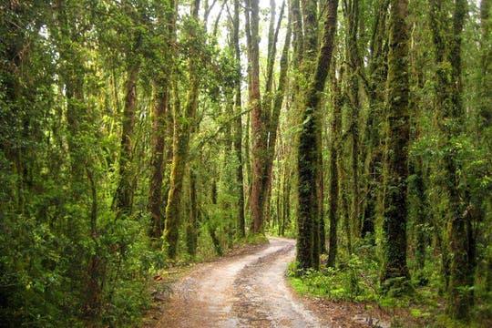 Los caminos y la naturaleza cobran vida en las estancias. Foto: Fundación Tompkins