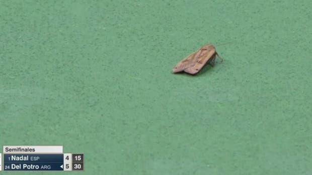 Una invitada extra durante la semifinal del US Open