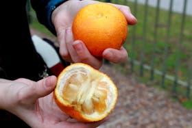 Una naranja amarga del Parque Thays