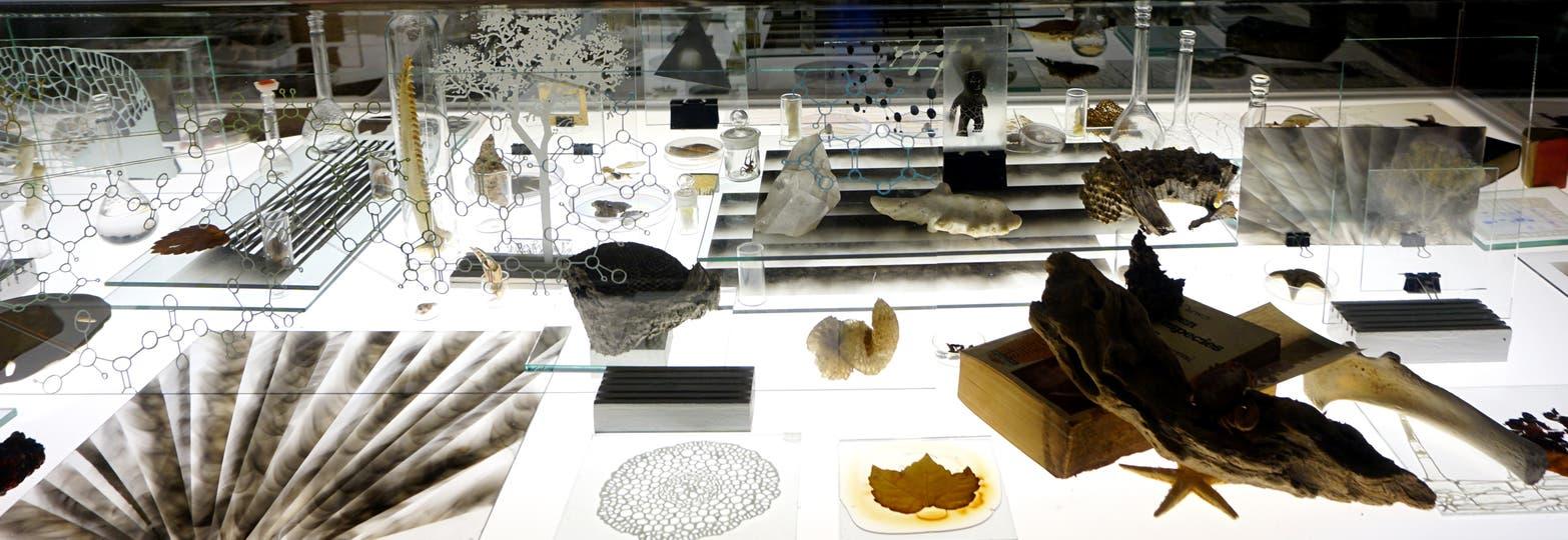 Gabinete de curiosidades, instalación de Pablo La Padula exhibida hasta abril de este año en el CCK