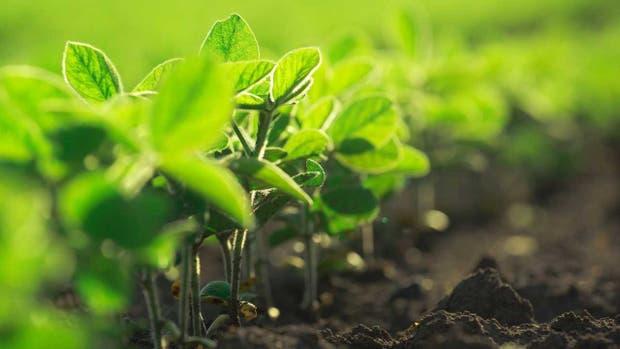 Más tecnología para el cultivo