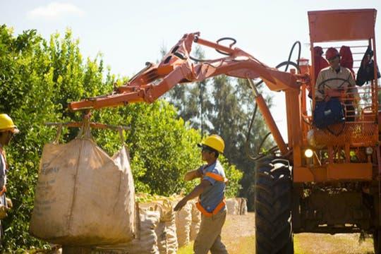 Máquina cargadora de bolsones durante la cosecha. Foto: http://lamoraleja.com.ar