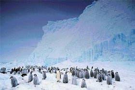 Colonia de pingüinos emperador, que habitan las zonas antárticas más próximas al polo sur