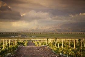 Bodega del Fin del Mundo lanzó Clos del Fin del Mundo, viñedo en Morada de los Andes y festejo por cosecha en Finca Propia