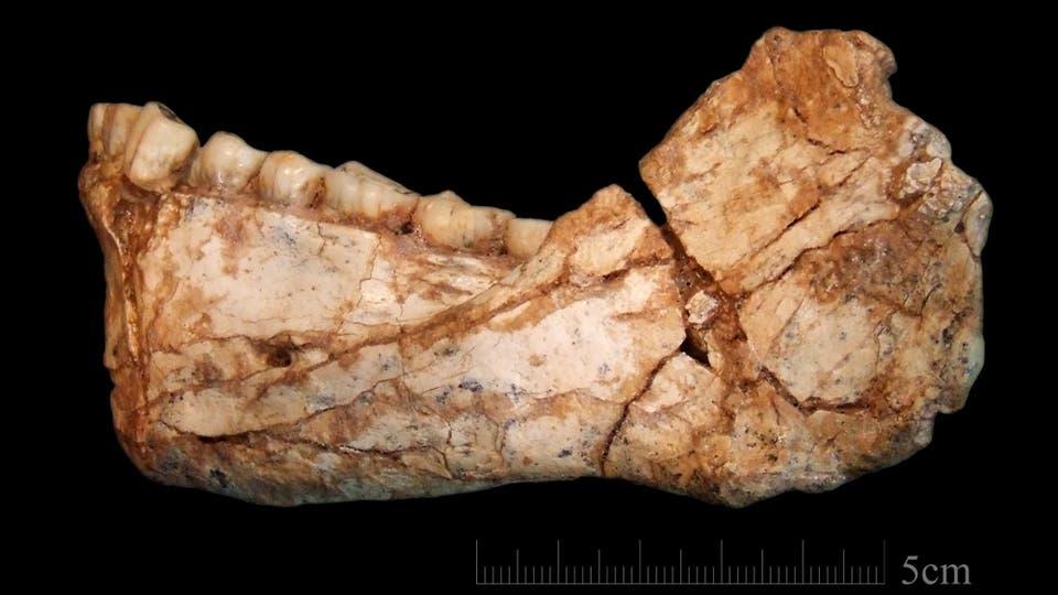 El homo sapiens tiene 100000 años más de los que se creía