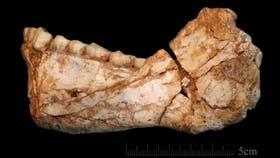 La mandíbula recuperada corresponde a un adulto casi completo, del sitio de Jebel Irhoud