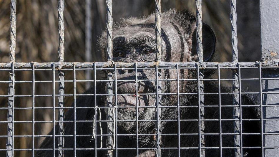 Fotos de Crisis de los zoológicos