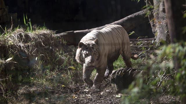 La idea es que haya especies autóctonas distribuidas según los ambientes naturales de cada región argentina