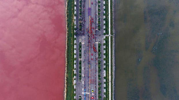 A los especialistas les llamó la atención que sólo de un lado de la carretera se tiñera de color púrpura