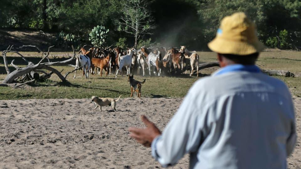 Lalo cría cabras que las lleva a tomar agua a un arroyo casi seco. Foto: LA NACION / Diego Lima