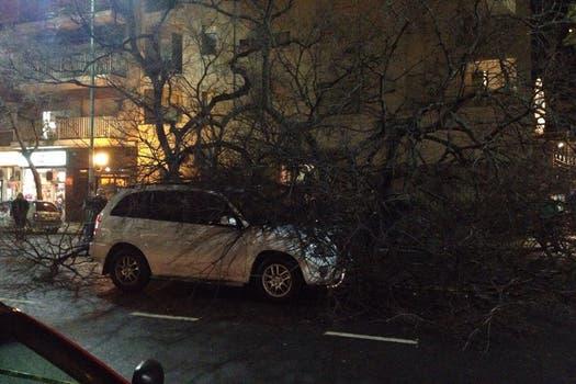 El árbol cayó sobre la calle Juramento al 2100. Foto: LA NACION / Romina Collman