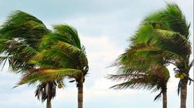 Las palmeras de Gulfstream ya sienten la fuerza del viento