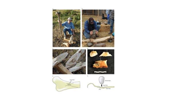 Una foto muestra un experimento de la rotura del hueso de un elefante moderno en un intento de determinar las clases de patrones de la rotura resultantes de la percusión del martillo de piedra.. Foto: AFP / San Diego Natural History Museum