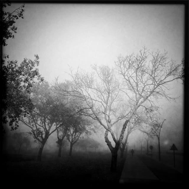 Niebla (Julio 2014)